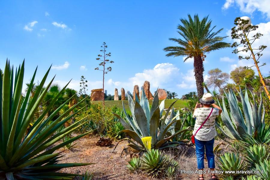 В саду кактусов. Тель-Авив. Экскурсия гида в Израиле Светланы Фиалковой.