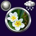 Flores Tiempo Reloj Widget icon