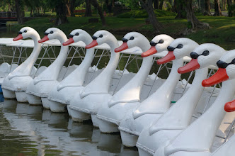 Photo: Too hot to be pedaling around with a swan.