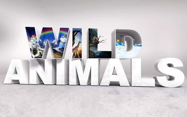 Wild Animals Tab