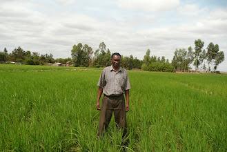 Photo: Mathew Mwaura in his SRI field in Kenya [Photo Courtesy of Bancy Mati]