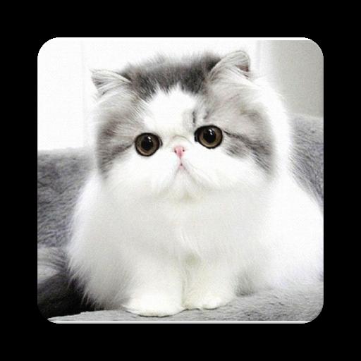 Funny Kitty (app)