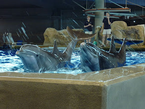 """Photo: Dolphins saying, """"Hello!""""...  ... and goodbye. The Minnesota zoo is finding a new home for the dolphins I love to visit... :( They have to renovate the exhibit, and they say that when they move the dolphins, they will not be coming back... sigh... I will miss them. And my kids will not be able to see these wonderful creatures anymore. We just live too far away from any other dolphins. I hope thet they will be happy in their new home... but I feel like crying.  Anyway... this is for #dolphinsarecool +shane holsclaw +Jeff Smith +Jeff Moreau +Adrian Rodriguez +Kerry Murphy +Kelly-Shane Fuller +Tana Teel +Shelly Gunderson +Isabelle Fortin +Ricardo Williams +Nick Gatens +kimberly pemberton +Robin Griggs Wood +Sam Weinstein +Sandra Parlow +Isabelle Cardinal +Kristen Hill +Chris Miller +Tom Tran +Lee Daniels +Kelly-Shane Fuller +Mark Rodriguez +Levi Moore +Craig Szymanski +Jason Kowing +Jake Easley +Eustace James +Brad Buckmaster   ...... oooooo, all these tags are just evil! Bwahahahaha!"""
