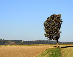 Photo: wind edge  #tree  #treetuesday  #treephotography  #hqsplandscape  #landscapephotography