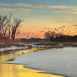 Driven to flight by the dawn's early light by Mitch Tranmer - Landscapes Sunsets & Sunrises ( sunrise, geese, nature, rural, nebraska, river, landscape )
