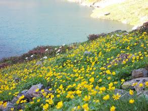 Photo: Au dessus de l'Etang rond , parterre fleuri