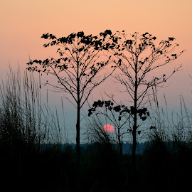 DAY END  IN A  VILLAGE by Amitabha Ghosh - Landscapes Sunsets & Sunrises ( red, sets, nature, nature sun landscape red  evenning, colourful, rise, evening, sun )