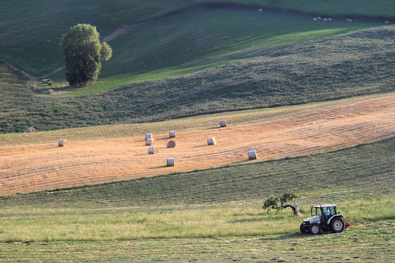 il lavoro dei campi di rino_savastano