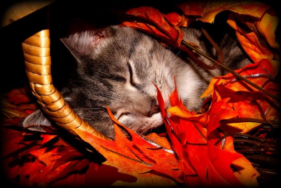 by April Merrick - Animals - Cats Portraits