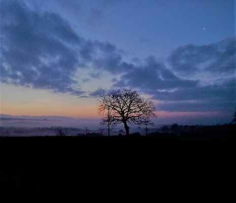 L'albero è il più grande successo della natura. (Anonimo) di Nikaele