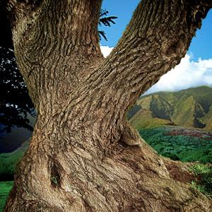 Coral Tree Trunk.jpg