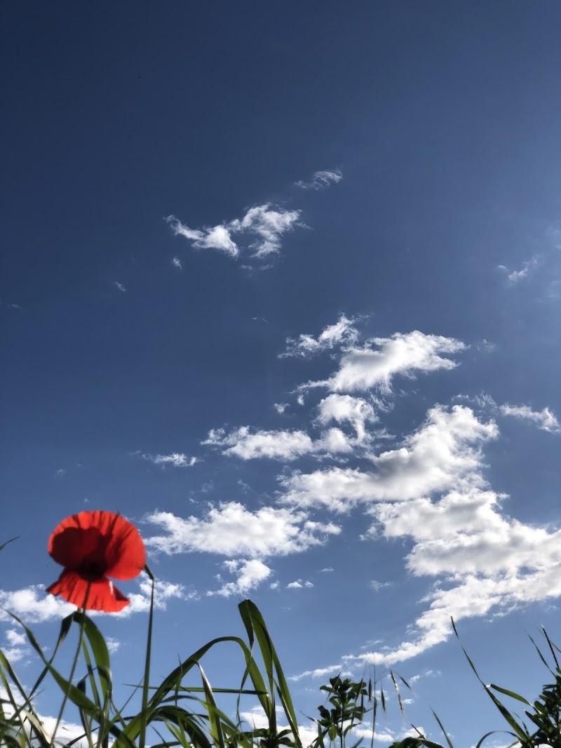 nel cielo azzurro  di mesy