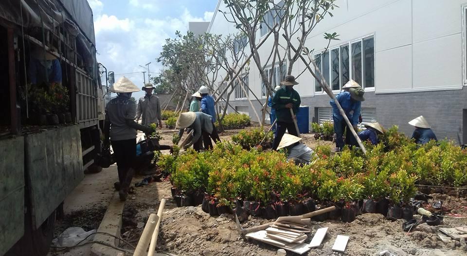Dịch vụ trồng cây được rất nhiều xí nghiệp và công ty quan tâm