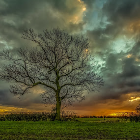 get off my land by Lester Woodward - Landscapes Sunsets & Sunrises ( clouds, field, lone tree, sunset, lambley )