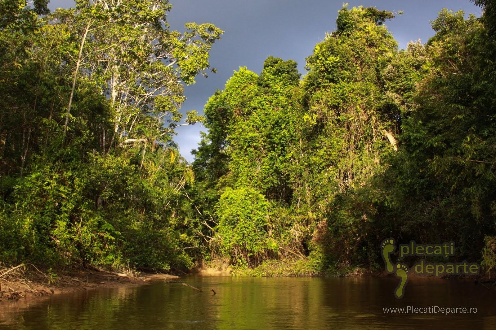 Raul Tibilo in jungla amazoniana, in Rezervatia Nationala Pacaya-Samiria, Peru
