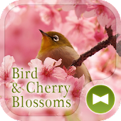 Bird & Cherry Blossoms Theme