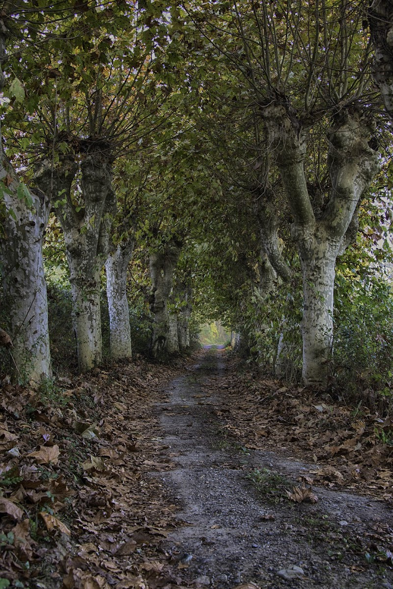 Passeggiata nel bosco di Gianva
