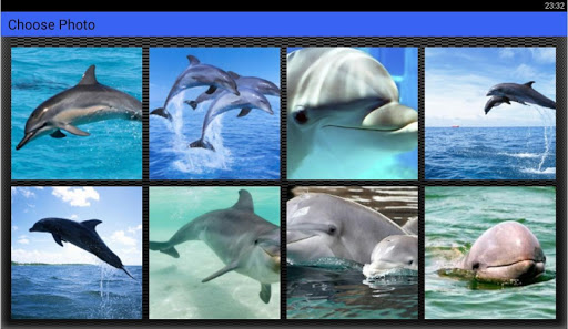 Dolphin Puzzles