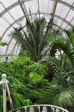 Photo: Zicht vanop bovendverdieping Palmhouse -Kew