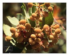 Photo: Eastern Sierras-20120717-829