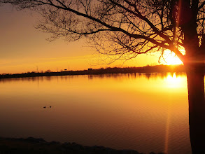 Photo: Beautiful sunset on a lake with a tree at Eastwood Park in Dayton, Ohio.