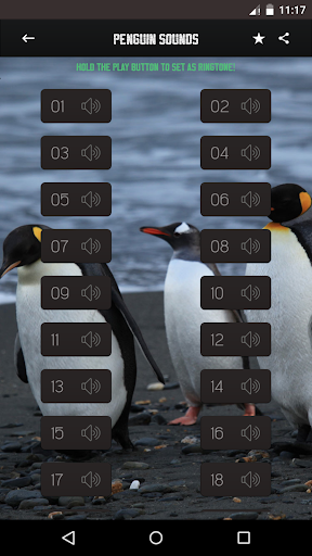 ペンギンサウンド