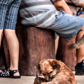 Dodger by Bendik Møller - Animals - Dogs Playing ( stray dog, dog portrait, stray, travel, close up, mammal, close, outdoors, outdoor, dog playing, day, dog, low, outside, travel photography, daylight, animal )
