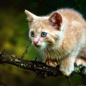 wariness by BO LED - Animals - Cats Kittens ( cat, nature, eyes, animal,  )
