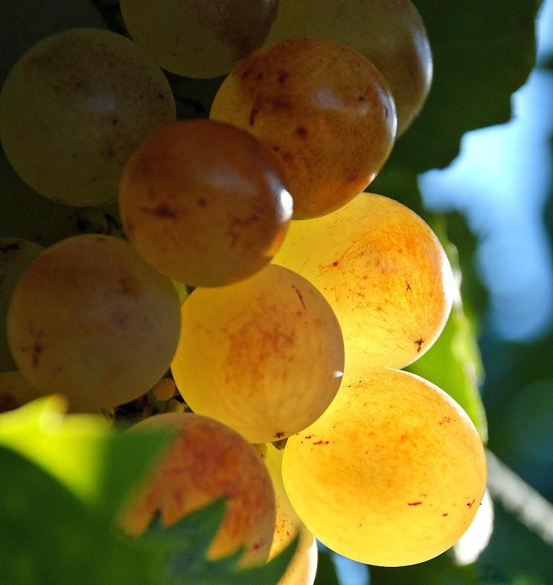 l'autunno si colora di oro di Luciano Fontebasso