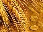 The Difference Between Gluten And Wheat Recipe