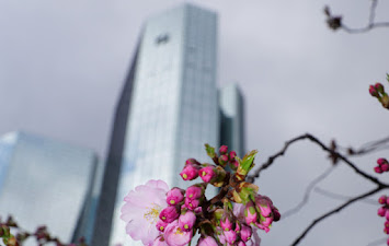 Frankfurt 2015.jpg