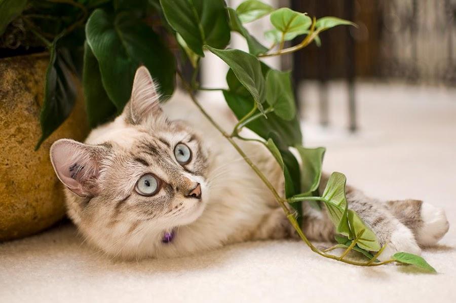 by Ryan Li - Animals - Cats Playing