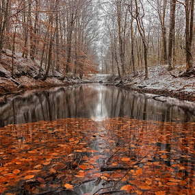 Winter and fall collide  by Susan Campbell - Landscapes Waterscapes