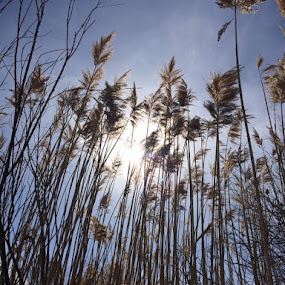 by Sonja Lawrence - Nature Up Close Leaves & Grasses (  )
