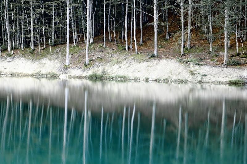 Il bosco incancato di donaphoto