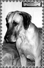 Photo: Doggi Diggarin Celaya
