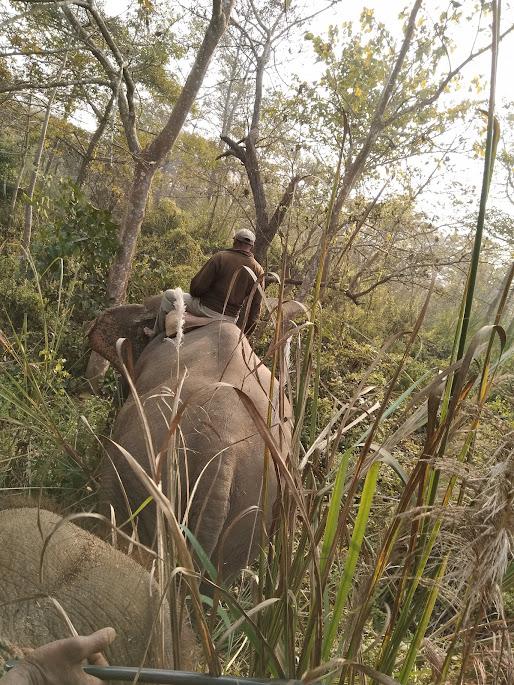 象の後ろ姿