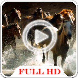 Horses Video HD Wallpaper