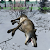 Animal Hunt: Ice Contract file APK Free for PC, smart TV Download