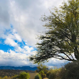 The Tree by Lori Fix - Landscapes Mountains & Hills