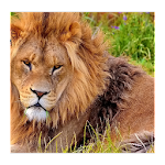 Animal HD Wallpapers Icon
