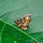 Mictopsichia Moth / Mariposa-Mictopsichia