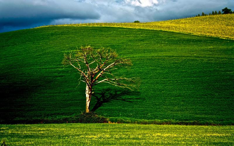 Verde primavera di IlCappellai0matt0
