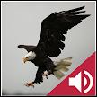 Bird and Animal soundboard APK