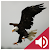 Bird and Animal soundboard file APK for Gaming PC/PS3/PS4 Smart TV