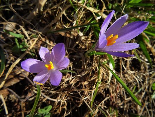 Anche i fiori preferiscono stare in coppia di lenuccia4