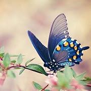 Приметы бабочка