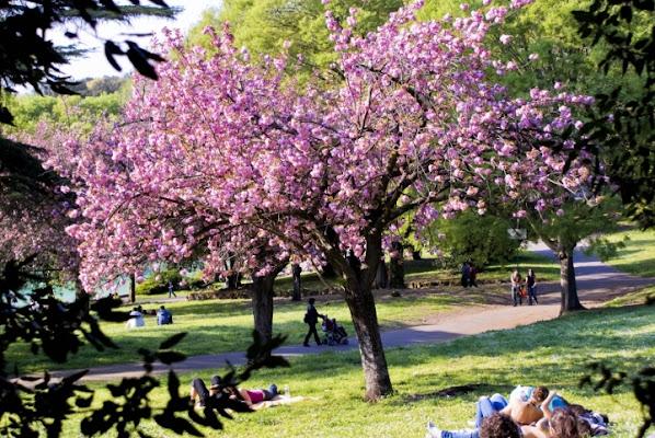 Viale delle magnolie di conteAttilio