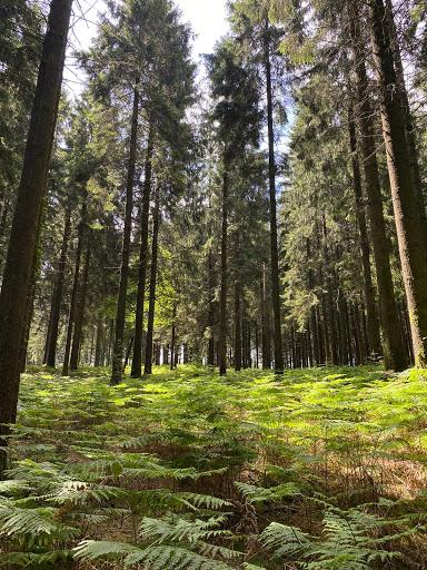 La forêt enchantée située à 10 min à pieds.