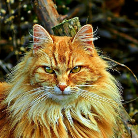Anouther Day by James Cole - Animals - Cats Portraits